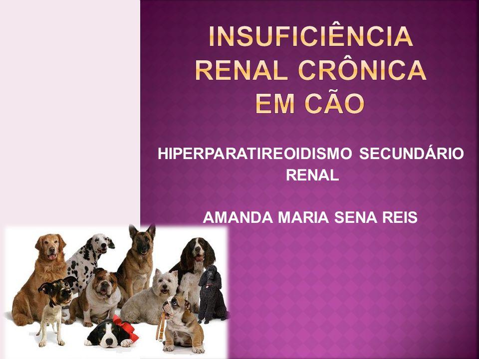 INSUFICIÊNCIA RENAL CRÔNICA em cão