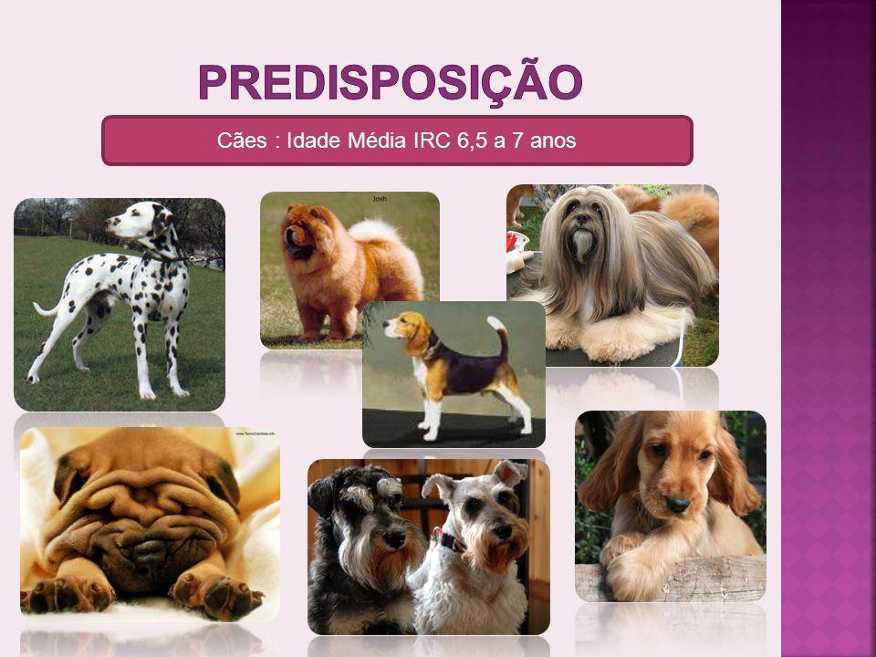 Cães : Idade Média IRC 6,5 a 7 anos