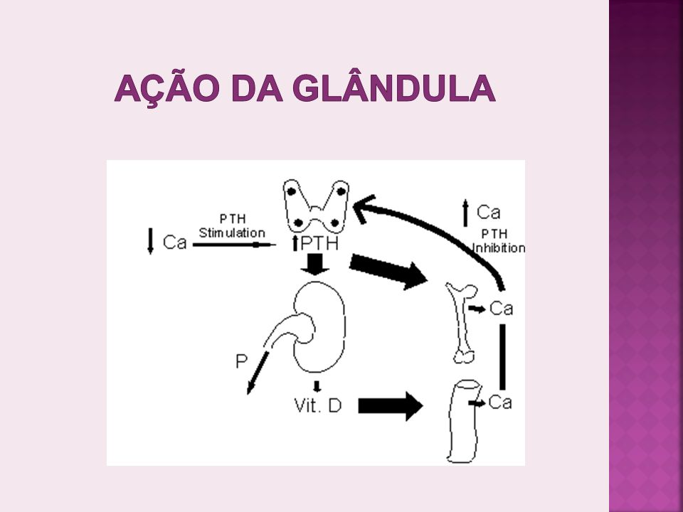 Ação da glândula