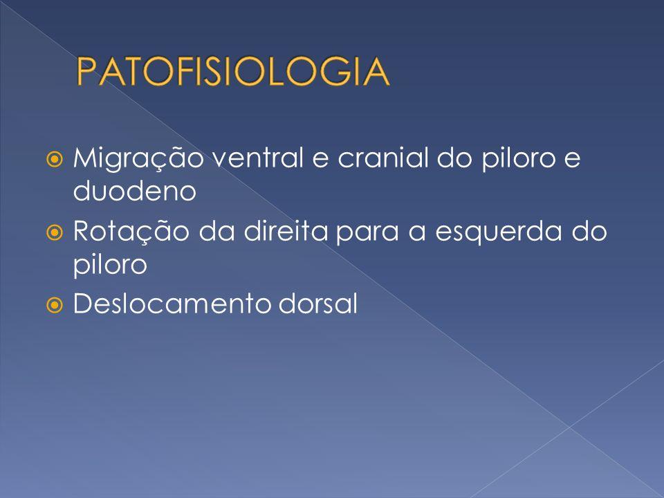 PATOFISIOLOGIA Migração ventral e cranial do piloro e duodeno