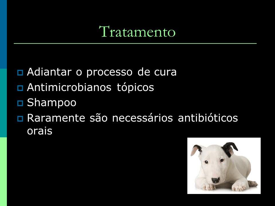 Tratamento Adiantar o processo de cura Antimicrobianos tópicos Shampoo
