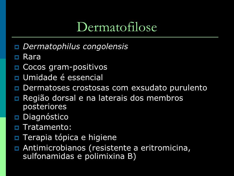 Dermatofilose Dermatophilus congolensis Rara Cocos gram-positivos
