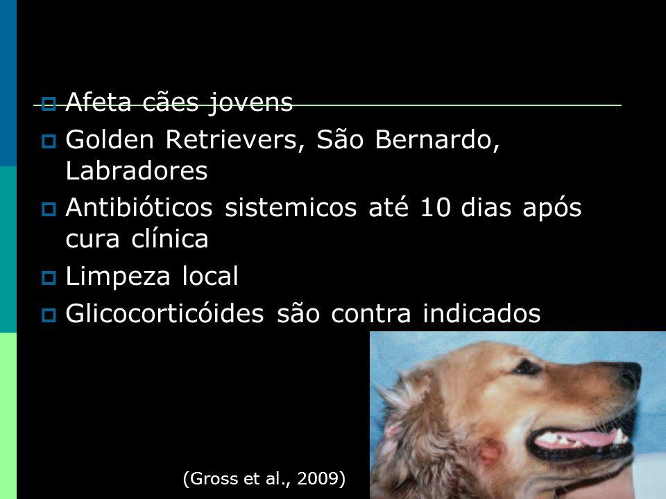 Golden Retrievers, São Bernardo, Labradores