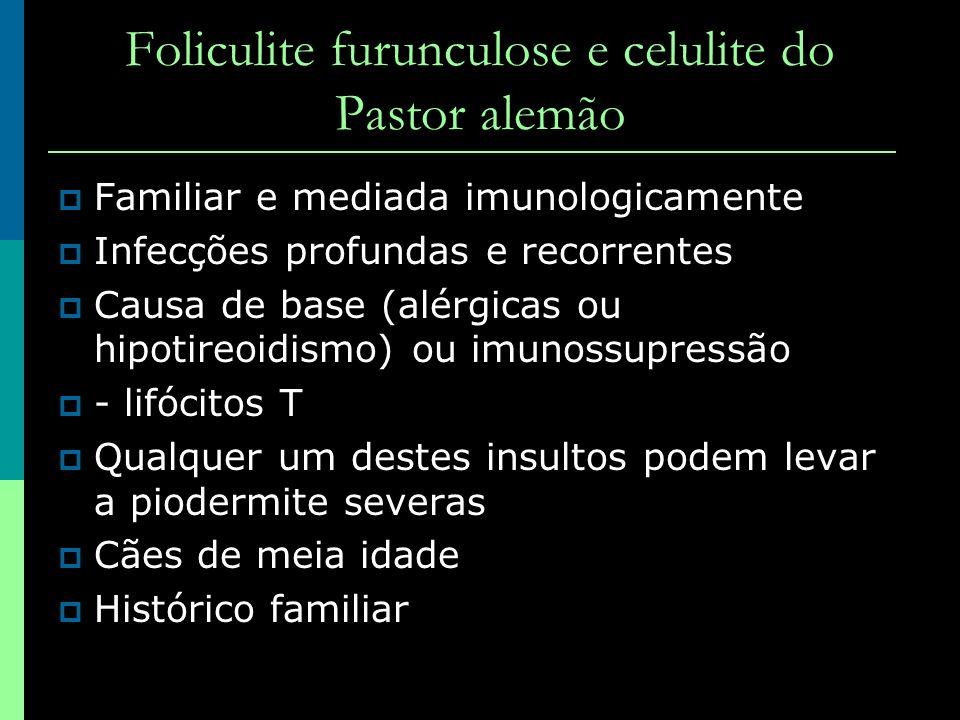 Foliculite furunculose e celulite do Pastor alemão