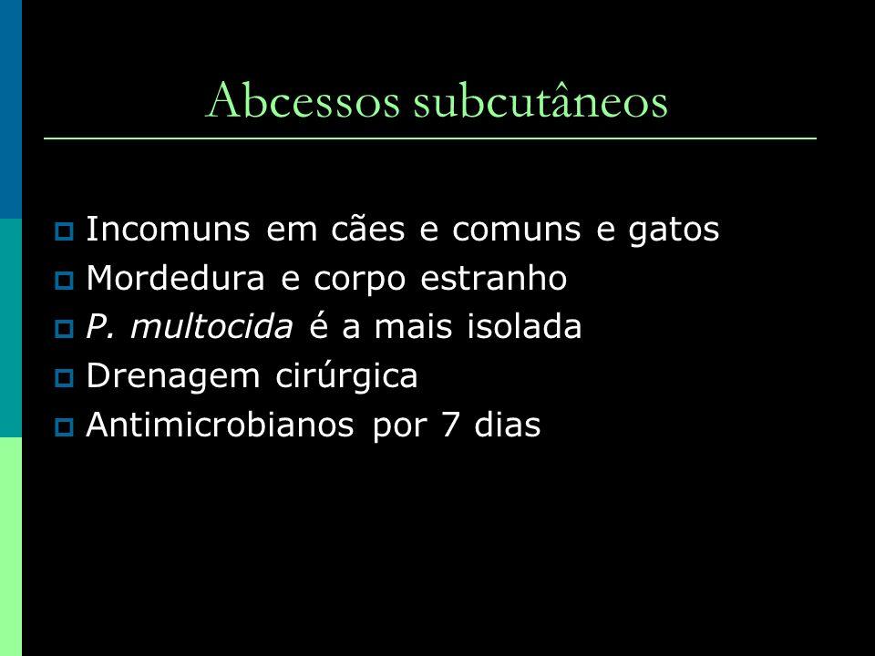Abcessos subcutâneos Incomuns em cães e comuns e gatos