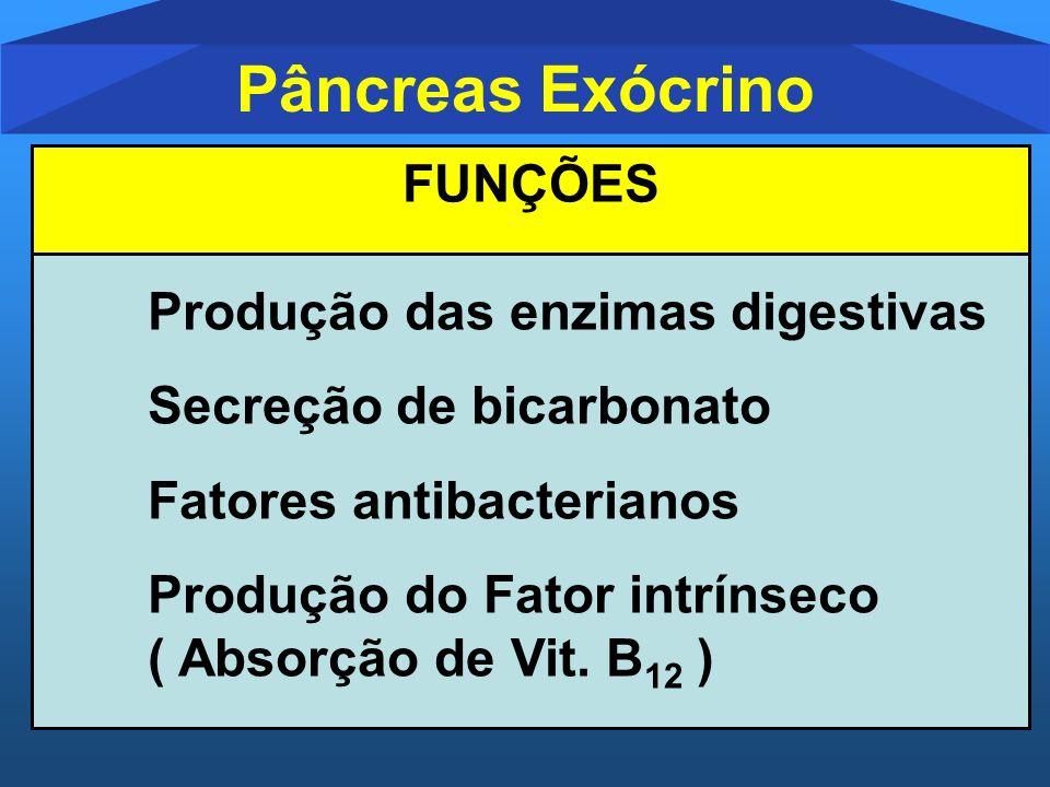 Pâncreas Exócrino FUNÇÕES Produção das enzimas digestivas