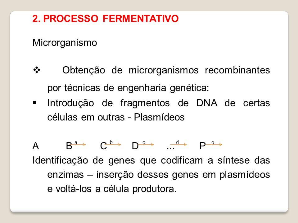 2. PROCESSO FERMENTATIVO Microrganismo