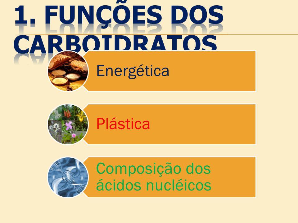 1. FUNÇÕES Dos cARBOIDRATOS