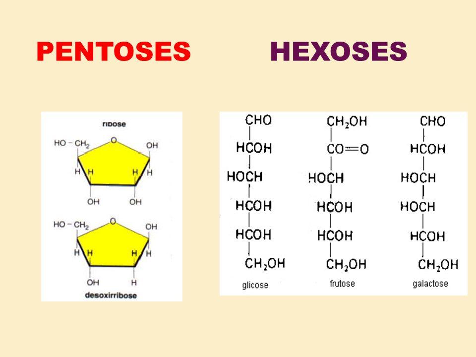 PENTOSES HEXOSES