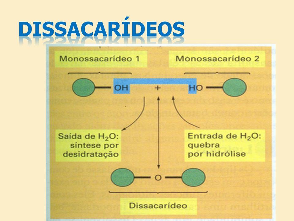 DISSACARÍDEOS