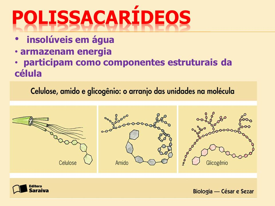 polissacarídeos insolúveis em água armazenam energia