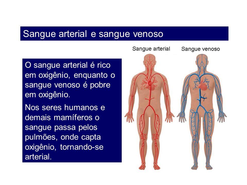 Sangue arterial e sangue venoso