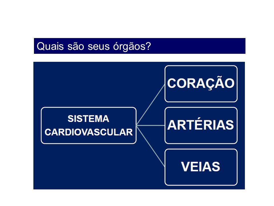 Quais são seus órgãos