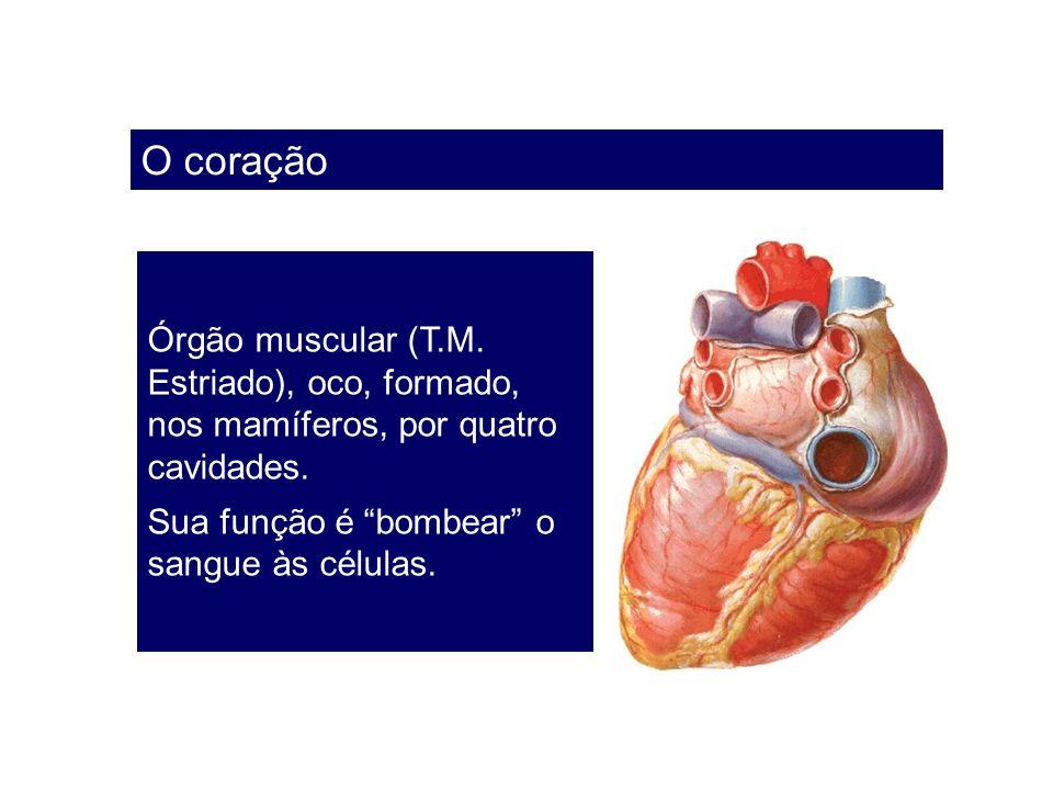 O coração Órgão muscular (T.M. Estriado), oco, formado, nos mamíferos, por quatro cavidades.
