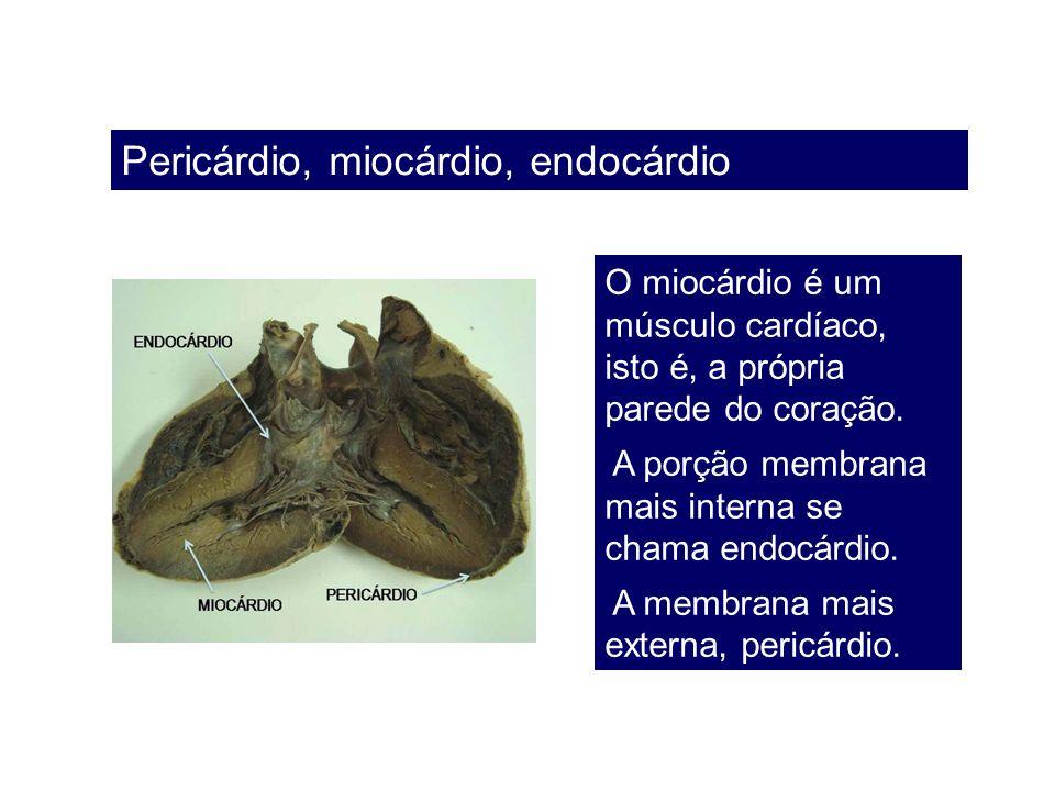 Pericárdio, miocárdio, endocárdio