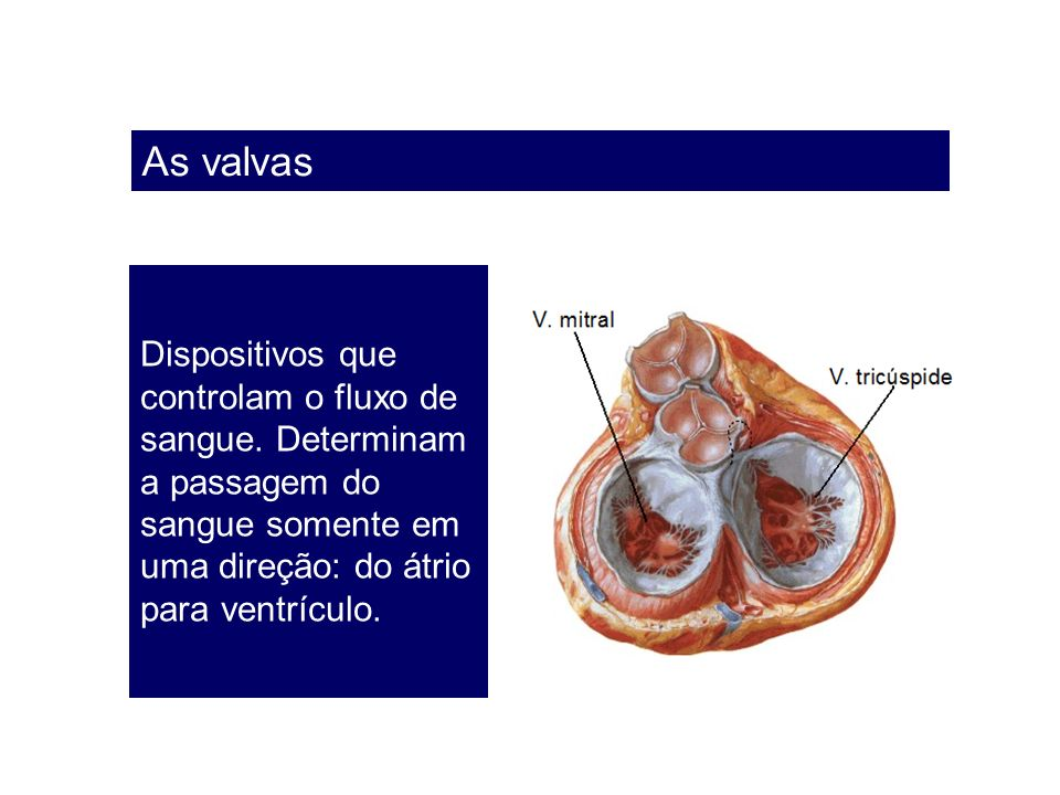 As valvas Dispositivos que controlam o fluxo de sangue.