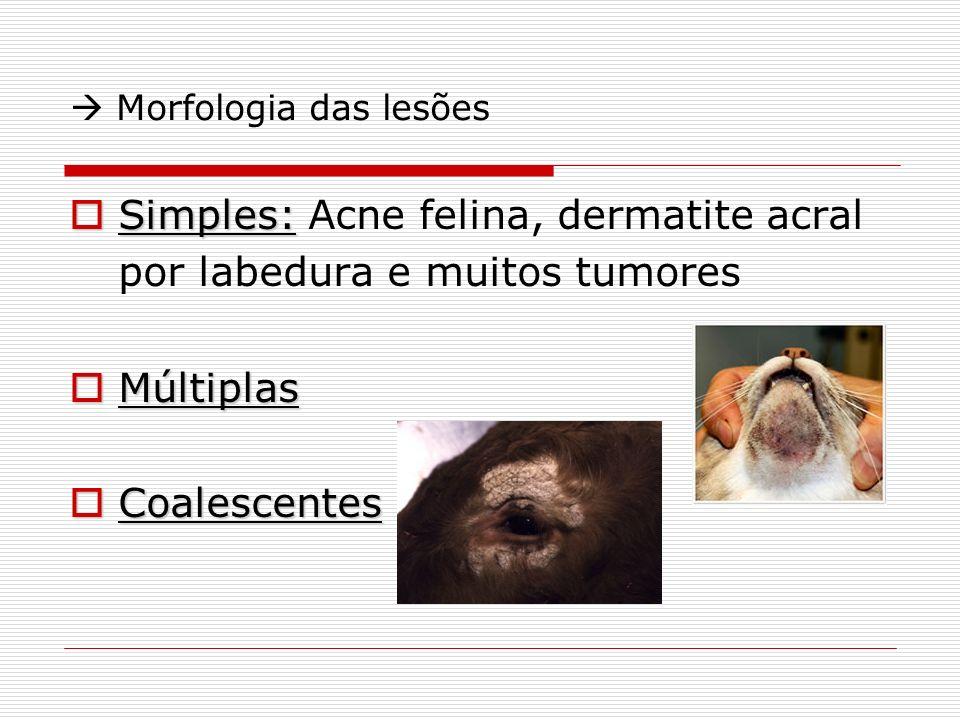  Morfologia das lesões