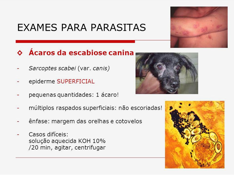 EXAMES PARA PARASITAS ◊ Ácaros da escabiose canina