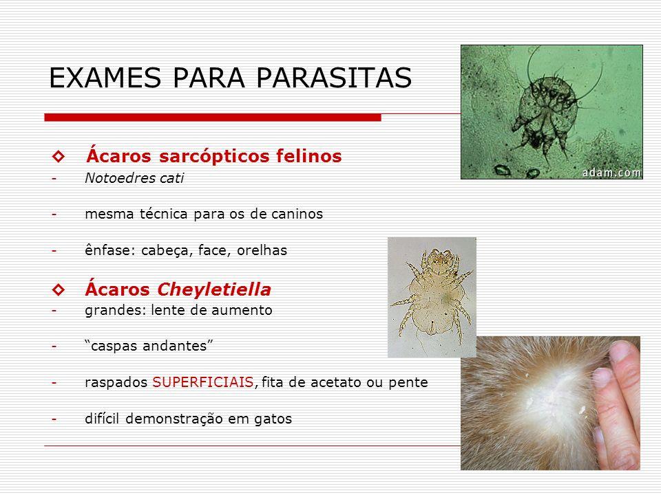 EXAMES PARA PARASITAS ◊ Ácaros sarcópticos felinos