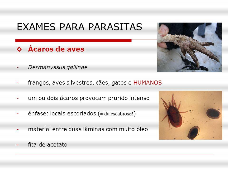 EXAMES PARA PARASITAS ◊ Ácaros de aves Dermanyssus gallinae