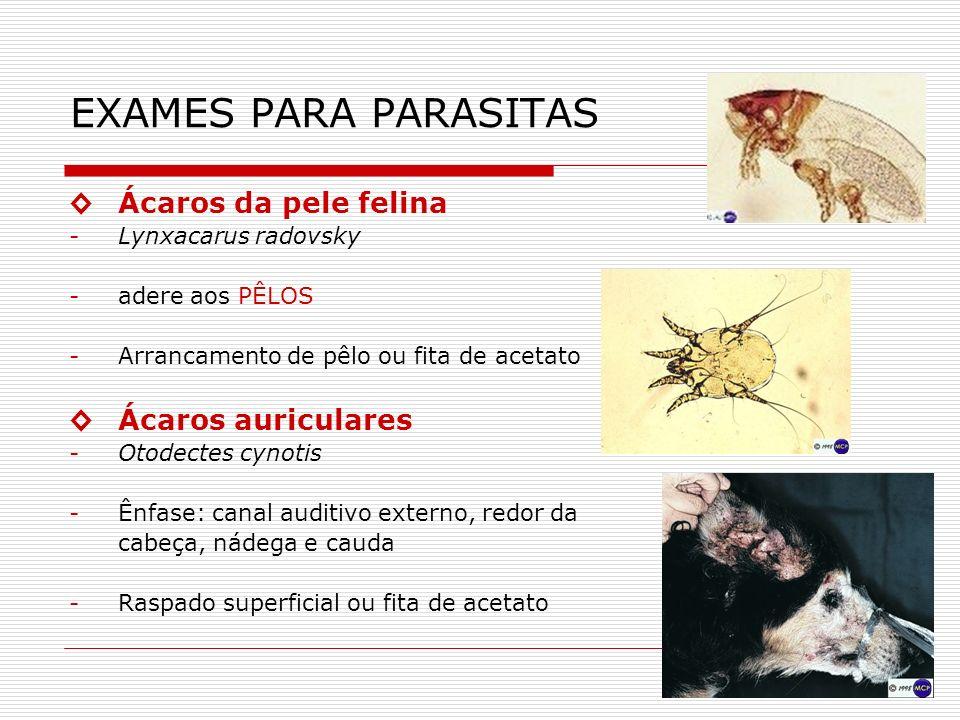 EXAMES PARA PARASITAS ◊ Ácaros da pele felina ◊ Ácaros auriculares