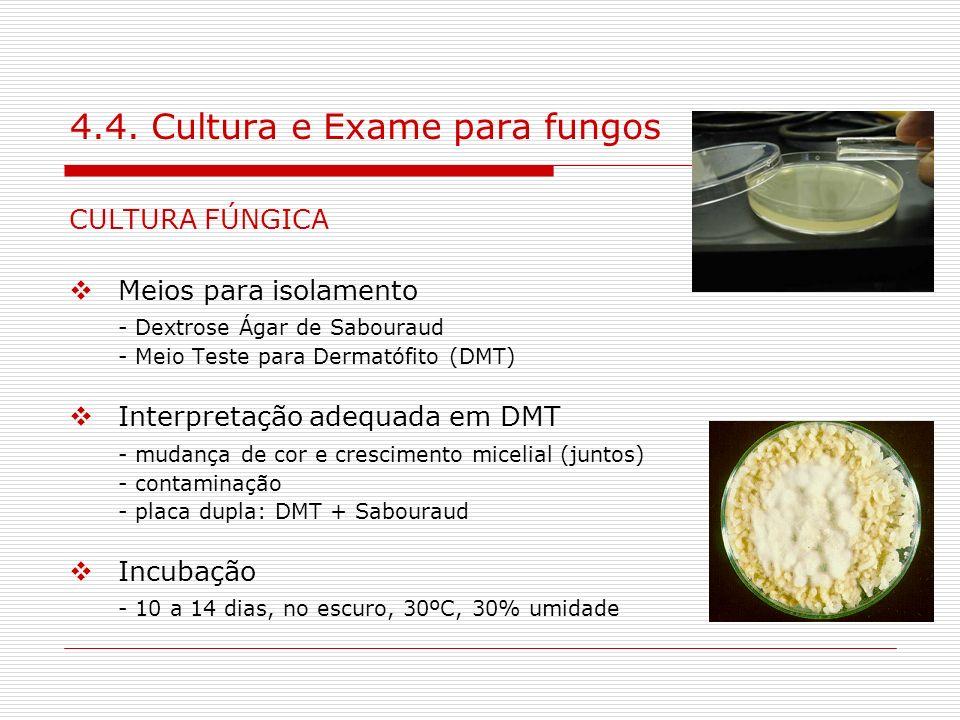 4.4. Cultura e Exame para fungos