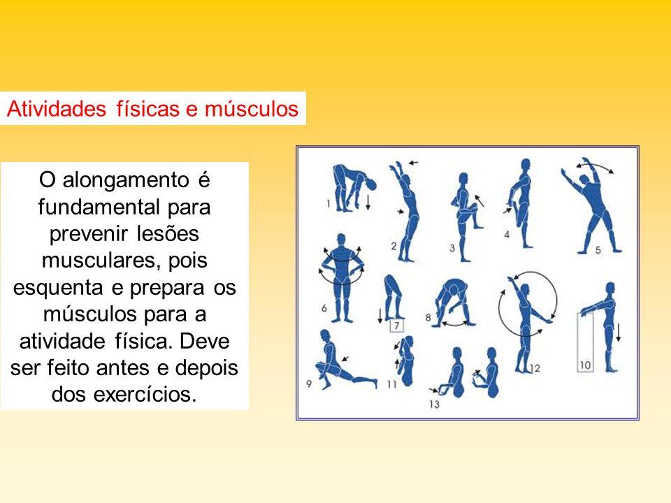 Atividades físicas e músculos