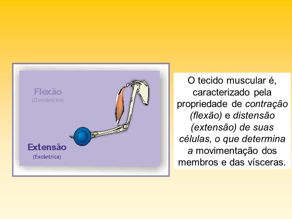 O tecido muscular é, caracterizado pela propriedade de contração (flexão) e distensão (extensão) de suas células, o que determina a movimentação dos membros e das vísceras.