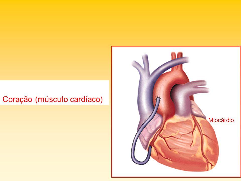 Coração (músculo cardíaco)