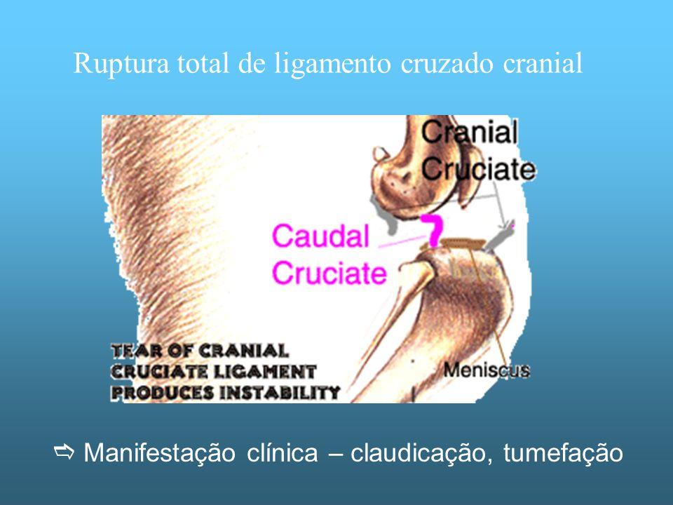 Ruptura total de ligamento cruzado cranial
