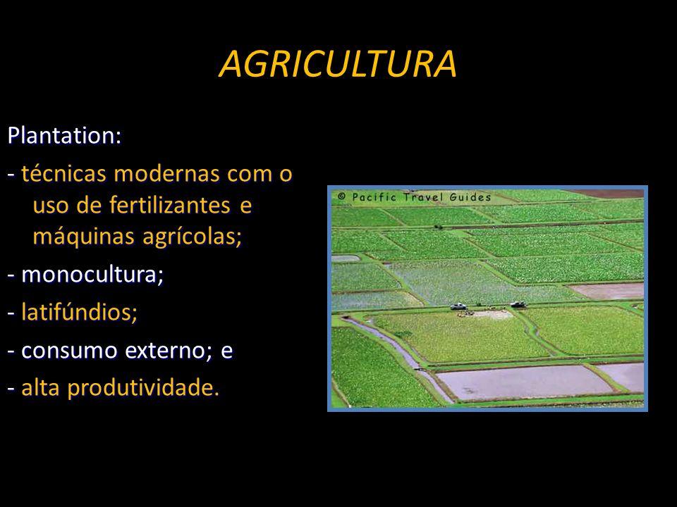 AGRICULTURA Plantation: