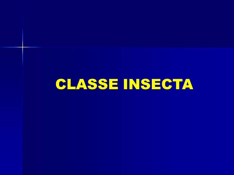 CLASSE INSECTA
