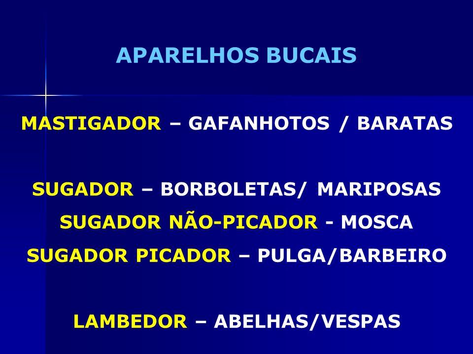 APARELHOS BUCAIS MASTIGADOR – GAFANHOTOS / BARATAS