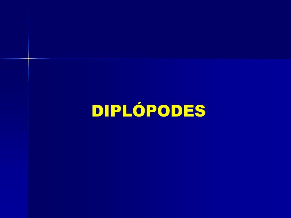 DIPLÓPODES
