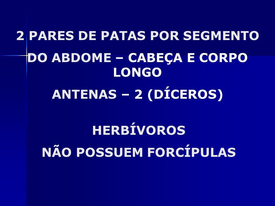 2 PARES DE PATAS POR SEGMENTO DO ABDOME – CABEÇA E CORPO LONGO