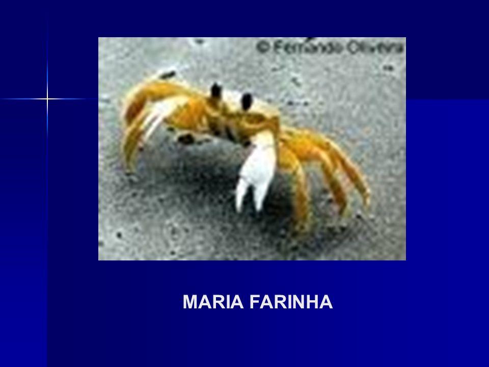 MARIA FARINHA