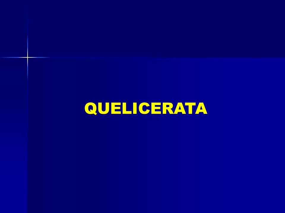 QUELICERATA