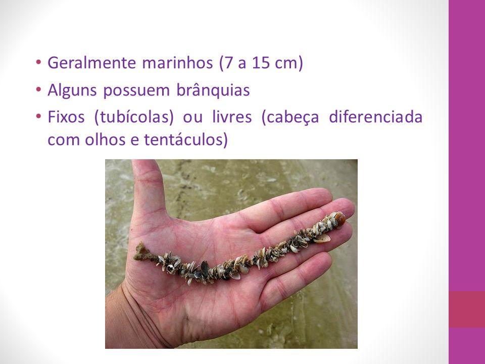 Geralmente marinhos (7 a 15 cm)