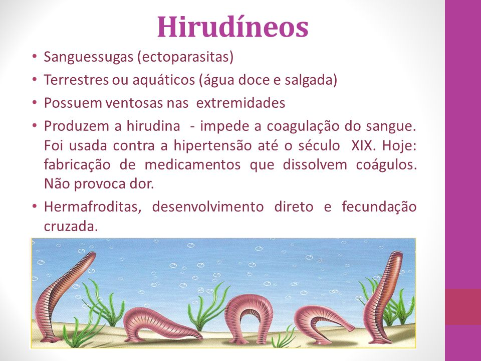 Hirudíneos Sanguessugas (ectoparasitas)