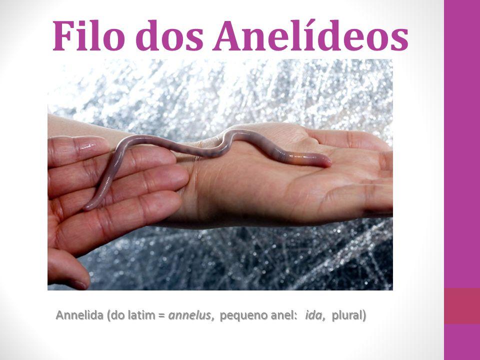 Annelida (do latim = annelus, pequeno anel: ida, plural)