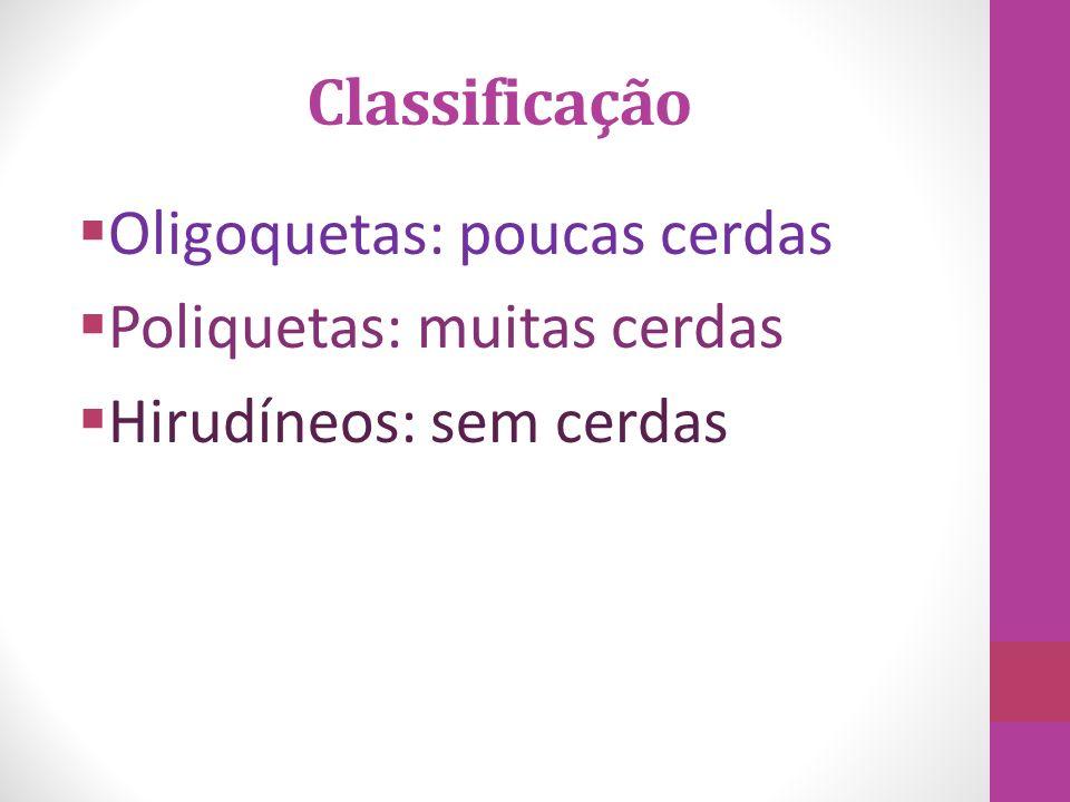 Classificação Oligoquetas: poucas cerdas Poliquetas: muitas cerdas