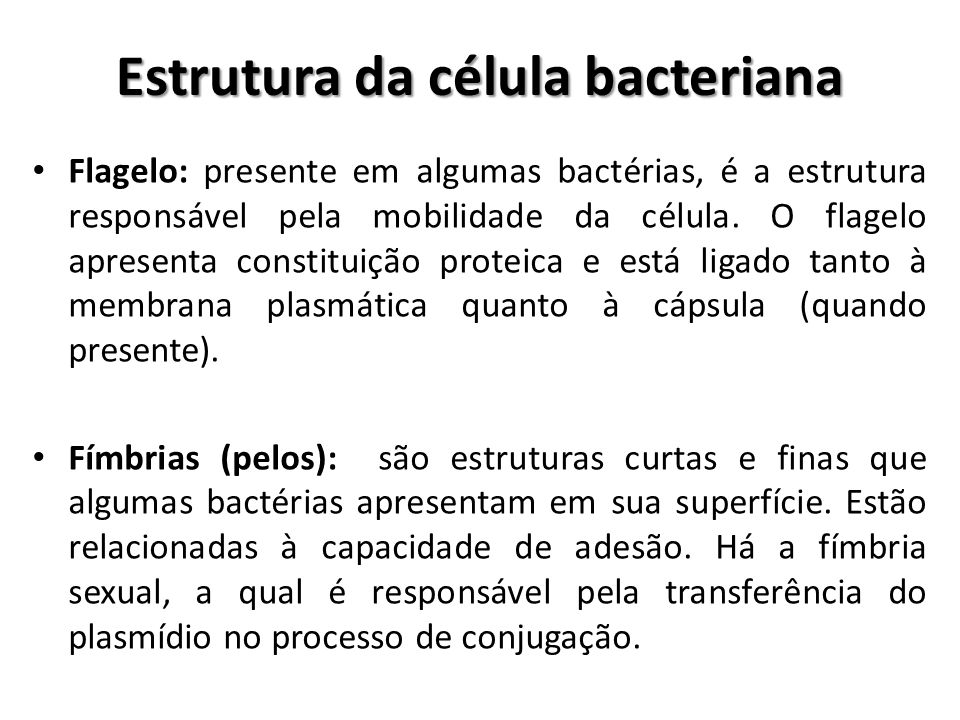 Estrutura da célula bacteriana