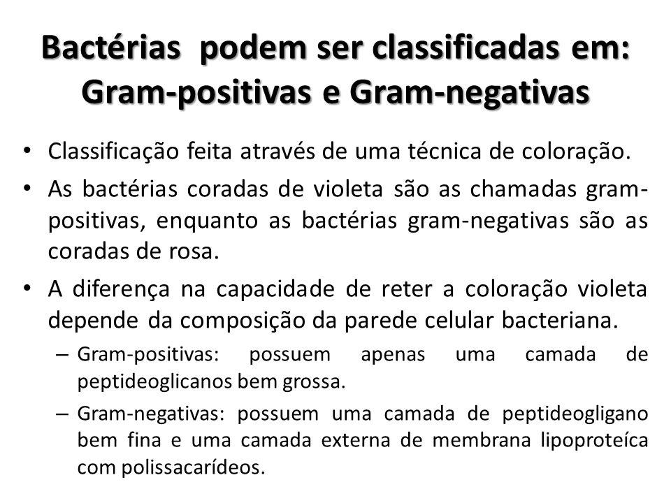 Bactérias podem ser classificadas em: Gram-positivas e Gram-negativas