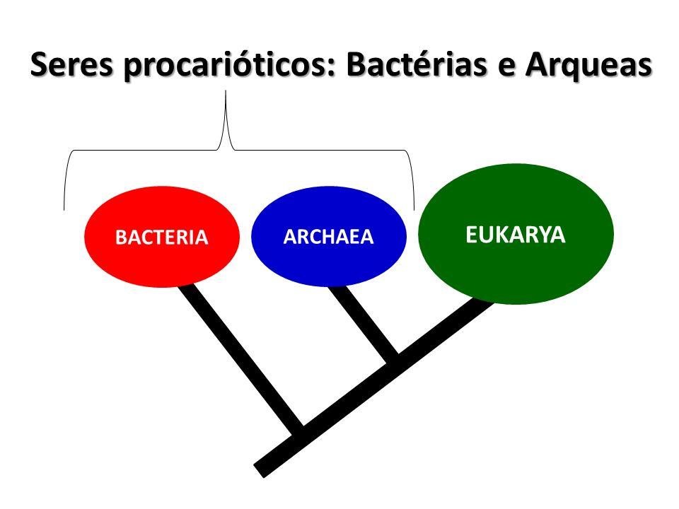 Seres procarióticos: Bactérias e Arqueas