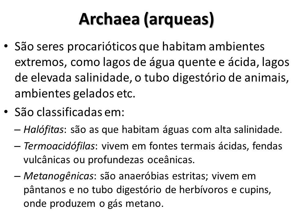 Archaea (arqueas)