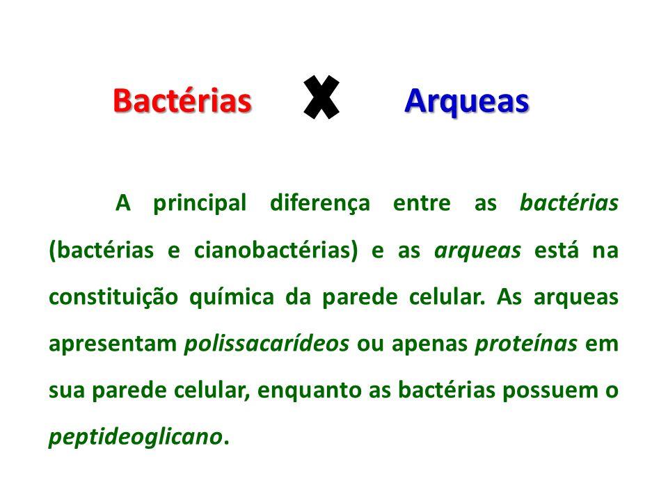 Bactérias Arqueas