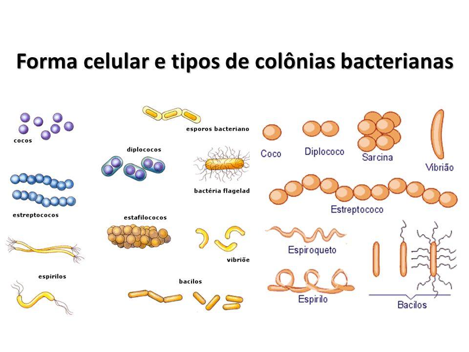 Forma celular e tipos de colônias bacterianas