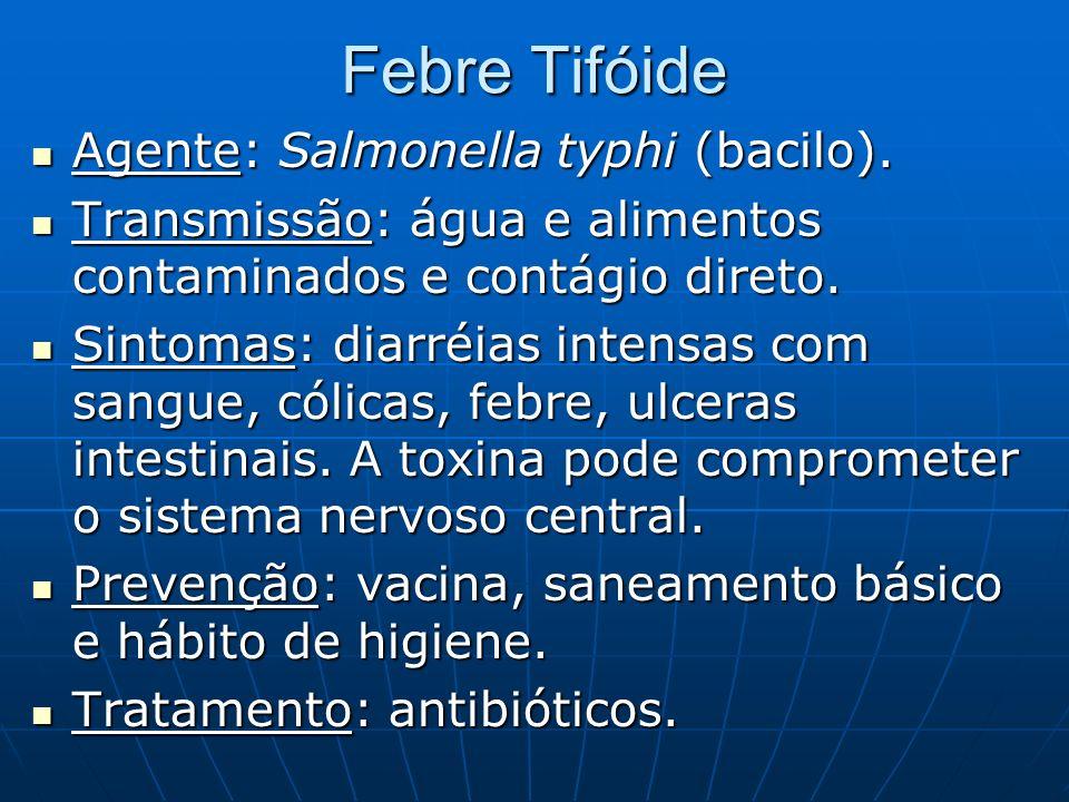 Febre Tifóide Agente: Salmonella typhi (bacilo).
