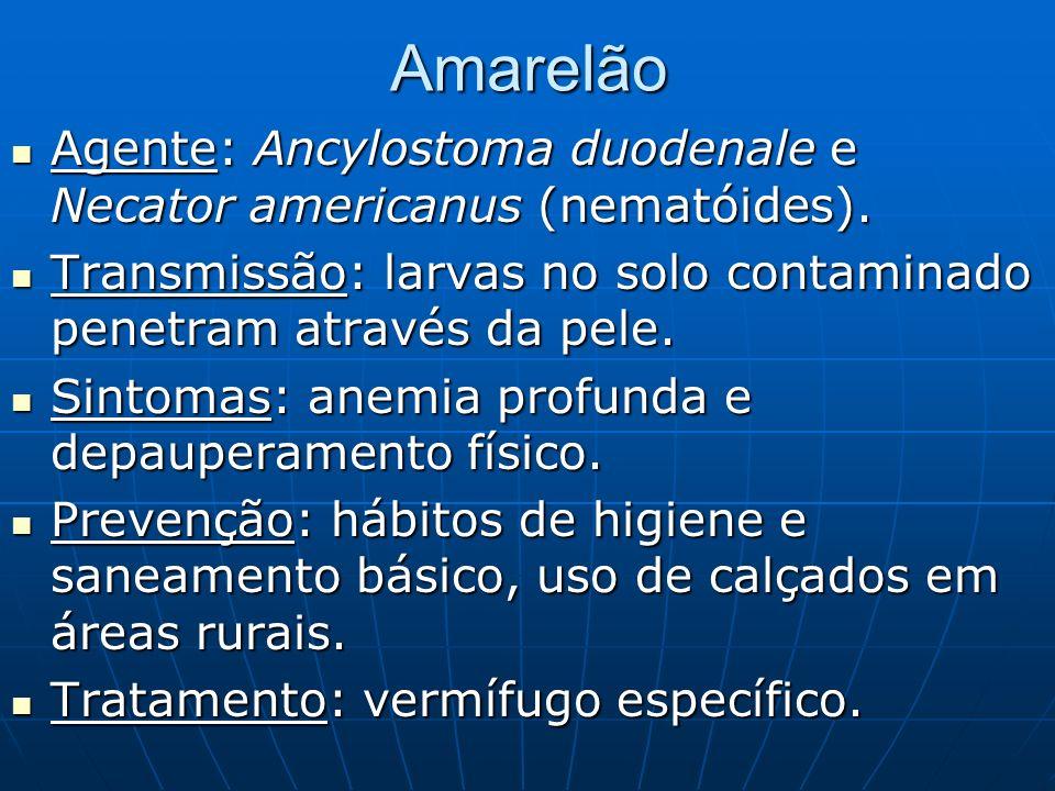 Amarelão Agente: Ancylostoma duodenale e Necator americanus (nematóides). Transmissão: larvas no solo contaminado penetram através da pele.