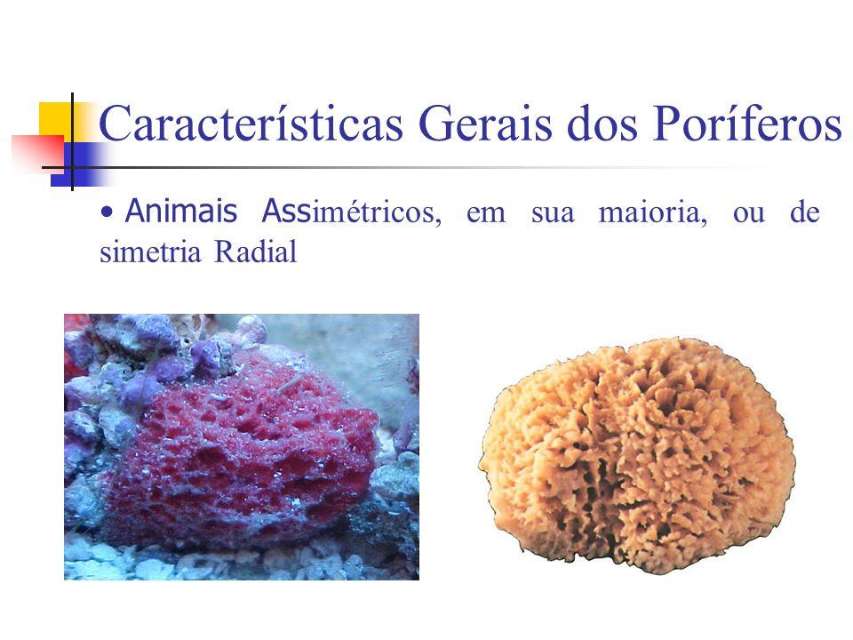 Características Gerais dos Poríferos